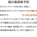 daiwa-05